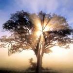 sabiduría-intuitiva