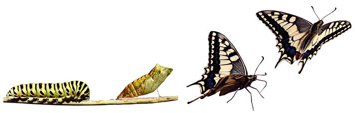 de-gusano-a-mariposa